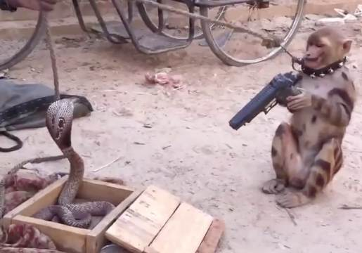 Weird AF: 2 Captive Monkeys & A Cobra (Whats Going On Here?)